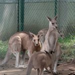 円山動物園-ほ乳類-草食