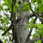 鳥撮り練習