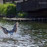 鳥撮り精進