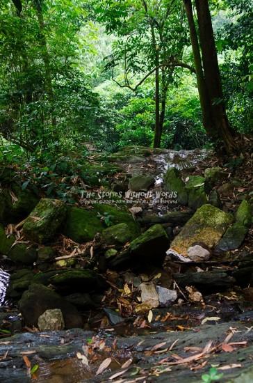 『森の奥へ』 K-5Ⅱs FA31mmF1.8 [31mm F2.8 1/125 ISO800 ±0EV]
