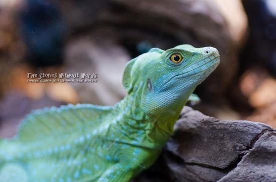 『たぶん恐竜もこんな感じ』 K-5Ⅱs TAMRON 90mmF2.8 Macro(272E) [90mm F2.8 1/45 ISO3200 ±0EV]
