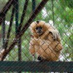 Thủ Lệ Zoo