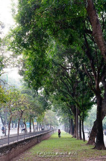 『緑の小路』 K-5Ⅱs FA31mmF1.8 [ F8 1/125 ISO1600]
