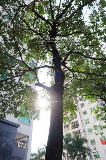『Shiny tree』 K-5Ⅱs DA15mmF4 [ F11 1/90 ISO400]