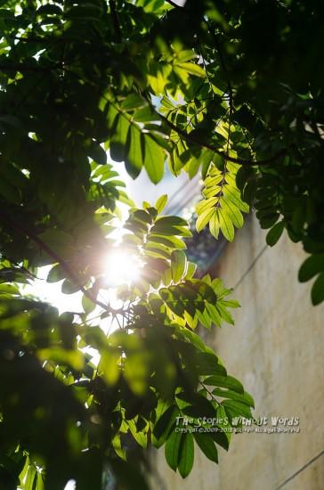 『太陽の恵み』 K-5Ⅱs FA77mmF1.8 [ F2.8 1/250 ISO160]