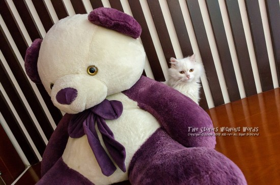 『美猫とパンダもどき』 K-5IIs DA15mmF4 [ F5.6 1/60 ISO3200]
