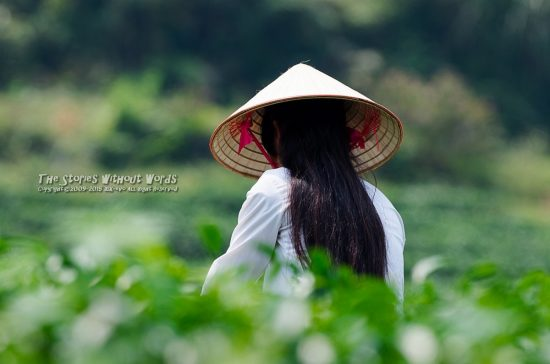 『Vietnamese Beauty』 K-5IIs DA*300mmF4 [ F5.6 1/750 ISO280]