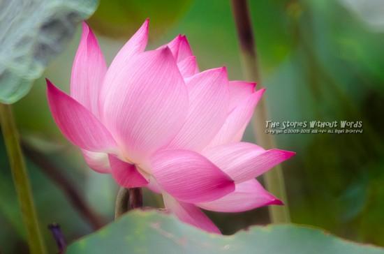 『光る花』 K-5IIs TOKINA TM500F8 [ F8 1/1000 ISO1600]