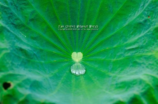 『I Love Water』 K-5IIs DA*300mmF4 [ F5.6 1/2000 ISO1100]
