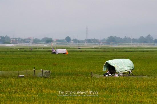 『Rice Field』 K-5IIs DA*300mmF4 [ F5.6 1/750 ISO2200]