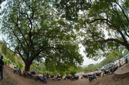『樹と樹とバイクとバイクとバイクと…』 10 mm-1-250 秒 (f - 4.0)