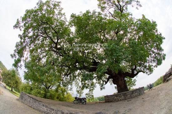 『樹とバイク』 10 mm-1-60 秒 (f - 4.0)