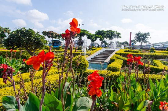 『ミニ庭園』 15 mm-1-500 秒 (f - 5.6)