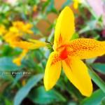 インドに咲く花