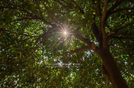 『Day Time Star』 [15 mm 1-750 秒 (f - 11) ISO 160]