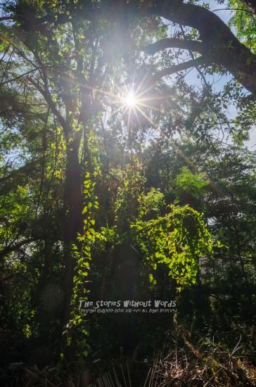 『逆光の美』 [15 mm 1-750 秒 (f - 11) ISO 160]