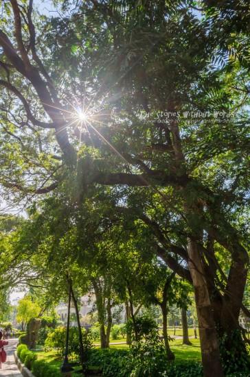 『太陽の国』 [15 mm 1-350 秒 (f - 11) ISO 160]