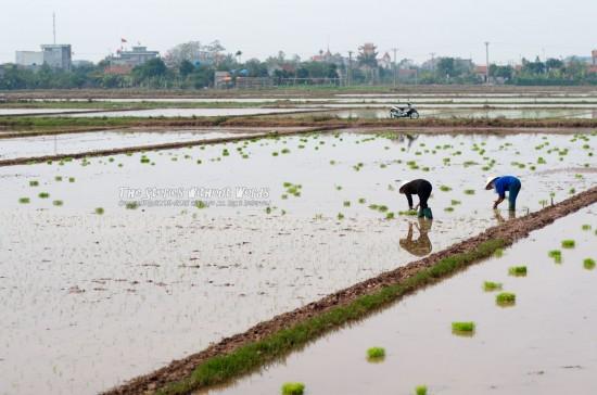 『ベトナムの風景』 [77 mm 1-4000 秒 (f - 2.8) ISO 160]
