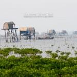 Vườn Quốc gia Xuân Thuỷ – 風景