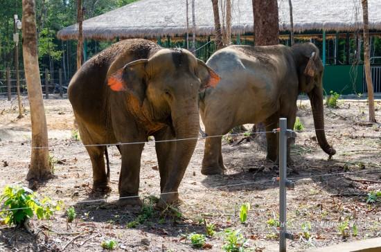 『小柄な象』 K-5IIs[50 mm 1-180 秒 (f - 5.6) ISO 160]