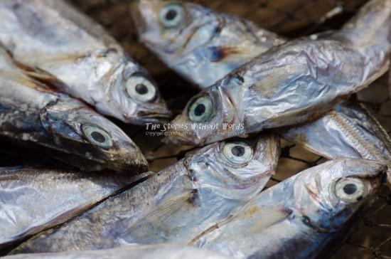 『死んだ魚の目』 K-5IIs[500 mm 1-1000 秒 (f - 8.0) ISO 160]