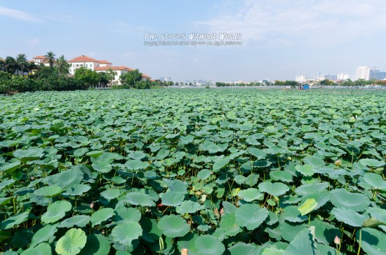 『LOTUS FIELD』 K-5IIs [15 mm 1-750 秒 (f - 5.6) ISO 160]