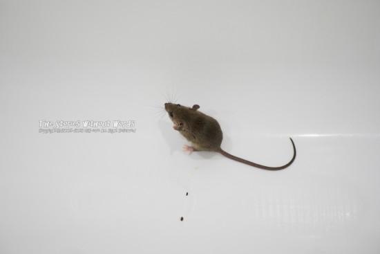 『有線マウス』 K-1 [100 mm 1-250 秒 (f - 2.8) ISO 1100]