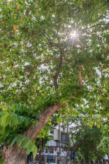 『太陽の恵み』 K-1 0827[15 mm 1-1000 秒 (f - 11) ISO 200]