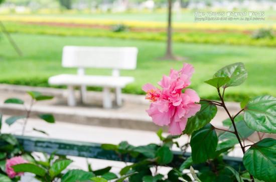 『南国の花』 K-5IIs [50 mm 1-250 秒 (f - 5.6) ISO 160]
