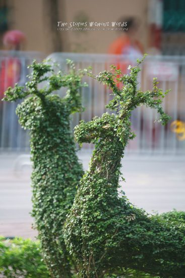 『Grass Deer』 α7RII [ 1-640 秒 ISO 6400]