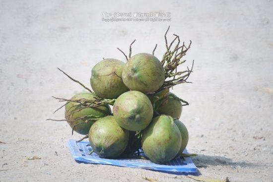 『路上の椰子』 α7RII [ 1-1000 秒 ISO 1000]