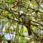 Aditi Garden – Birds