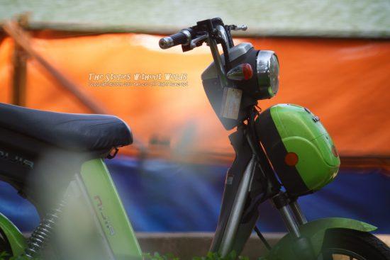 『年中オンシーズン』 A7RII / TAMRON SP500mmF8 [500mm F8 1/1000 ISO1600]