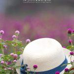 Flower Garden – 花とその他
