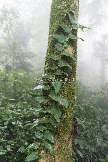 『樹を這う』 K-1 / FA31mmF1.8 [ F2.4 1/45 ISO280]