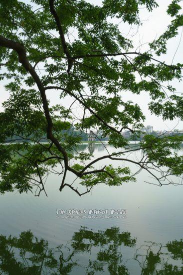 『緑と水と亀』 A7RII / SEL1635Z [35mm F4 1/500 ISO100]