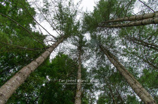 『高い樹と低い空』 K-5IIs / SEL1635Z [16mm F8 1/125 ISO140]