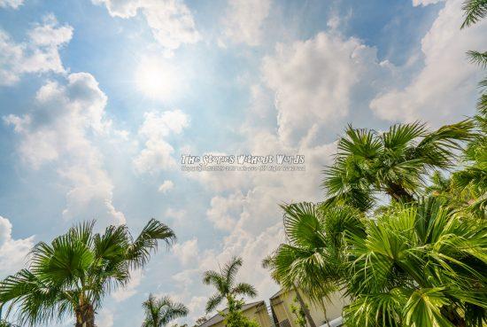 『陽の恵み』 A7RII [16 mm 1-4000 秒 (f - 16) ISO 100]