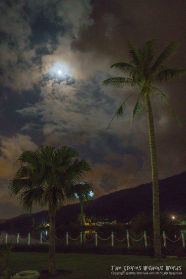 『夜木立』 A7RII [35 mm 1-15 秒 (f - 5.6) ISO 4000]