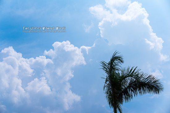 『夏風』 K-1 [55 mm 1-3000 秒 (f - 5.6) ISO 100]