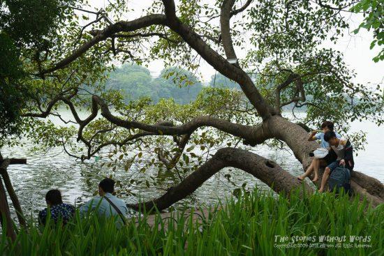 『倒木ではない』 [35 mm 1-250 秒 (f - 4.0) ISO 100]