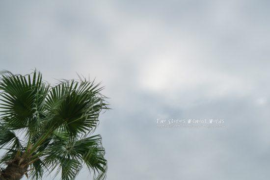 『光を求めて』 [35 mm 1-500 秒 (f - 5.6) ISO 100]